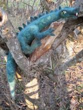 Draken Esmaragda