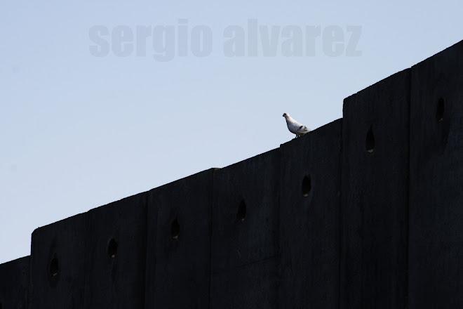 Mensajes desde el Muro - Palestina