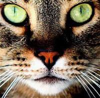 http://3.bp.blogspot.com/_QBIsdzMW-Es/RunIwWDG5eI/AAAAAAAAAF4/HfxkB-0pFyQ/s200/gato-ojos-verdes.jpg