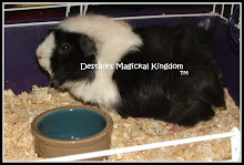 My Charm - Charmikins Guinea Pig/Cavy