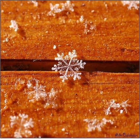Artistic Snowflake Shapes 6