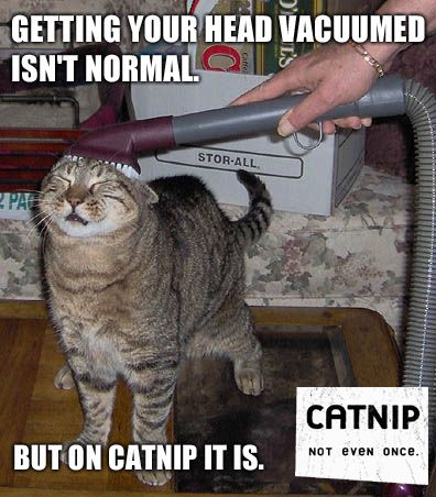 Getting Your Head Vacuumed Isn't Normal - But On Catnip It Is