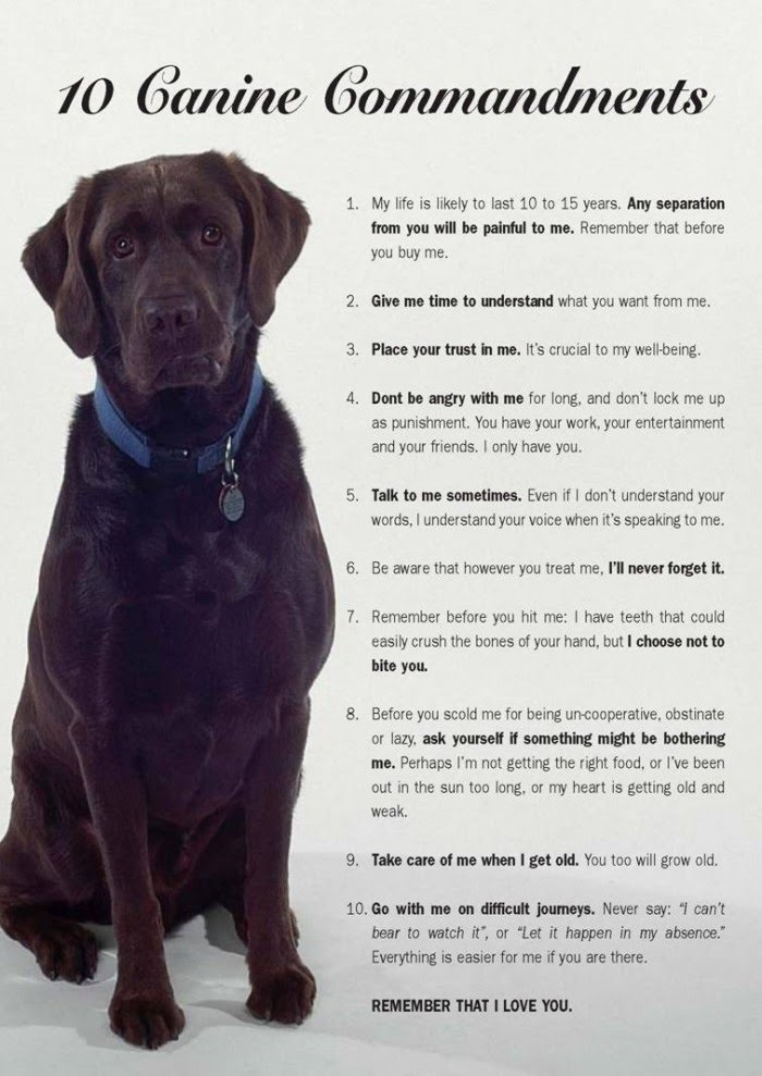 10 Canine Commandments - Dog Pet Care Tips