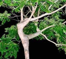 Árvore em movimento