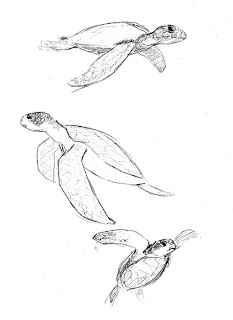 Sea Turtle Sketches http://sketchchronicle.blogspot.com/2009/07/happy-easter-and-sea-turtles.html