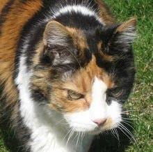 Molly, The Dowager Queen 1991-2010