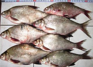 рыбалка на северном донце в ростовской области