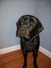 CCI Puppy #2: Oswego
