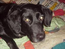 Det här är min älskade hund Ronja. Som jag var tvungen att lämna i Sverige. Visst är hon söt ♥ ♥