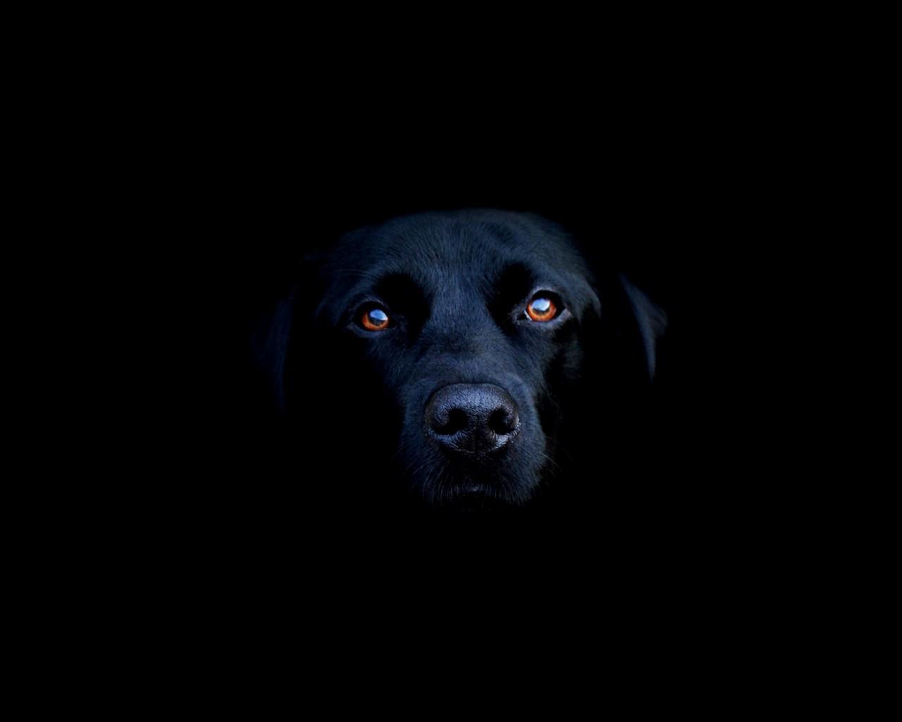 [Imagen: perro_negro-1280x1024.jpg]