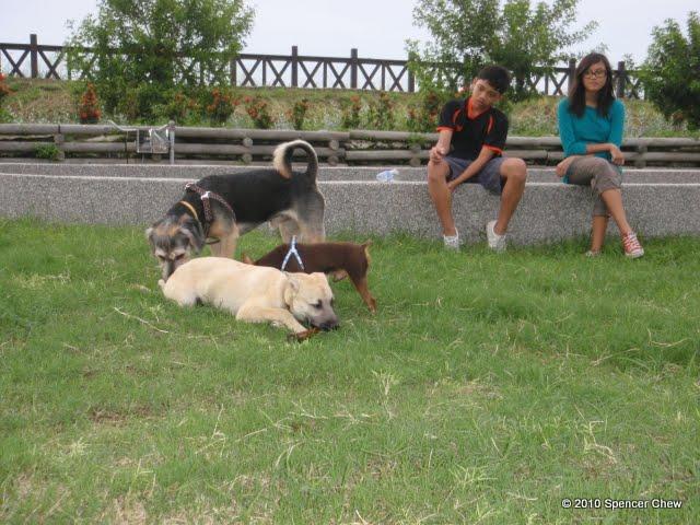 Dog Park Diclaimer