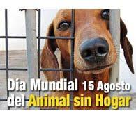 15 de Agosto- Día mundial del animal sin hogar