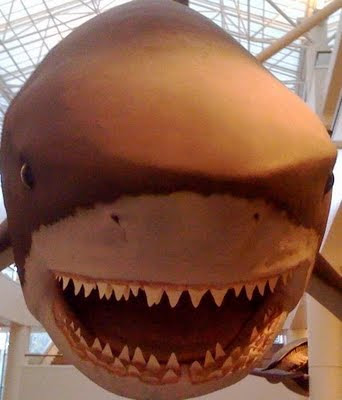 Ken Tanaka has a blog: Giant Prehistoric Shark Will Eat You Alive