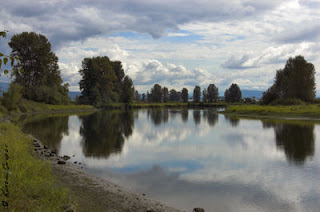 Pitt Polder, Maple Ridge, British Columbia, Canada