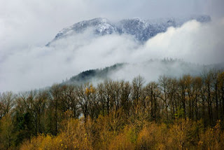 Brackendale Eagles Provincial Park, BC, Canada