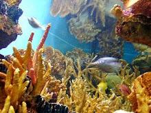 trumbu karang