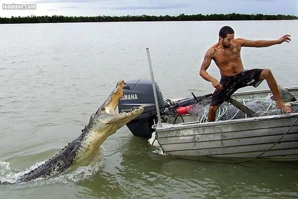 Crocodile with man