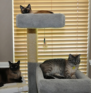 Do it yourself cat tree cat tree blueprints for Do it yourself cat tower