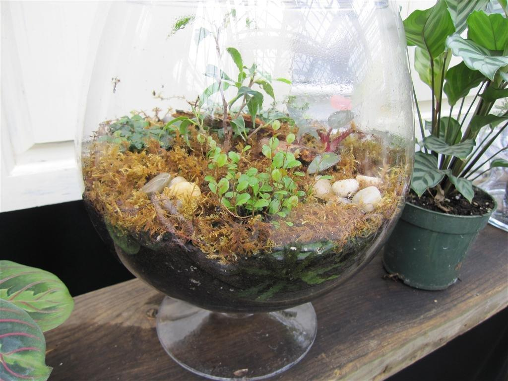 how to make a terrarium at If you own any bored reptiles and want to zest up their terrarium environment on a budget, this video will teach you how to make a cool waterfall for their terrarium.