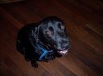 The Vagabond Dog