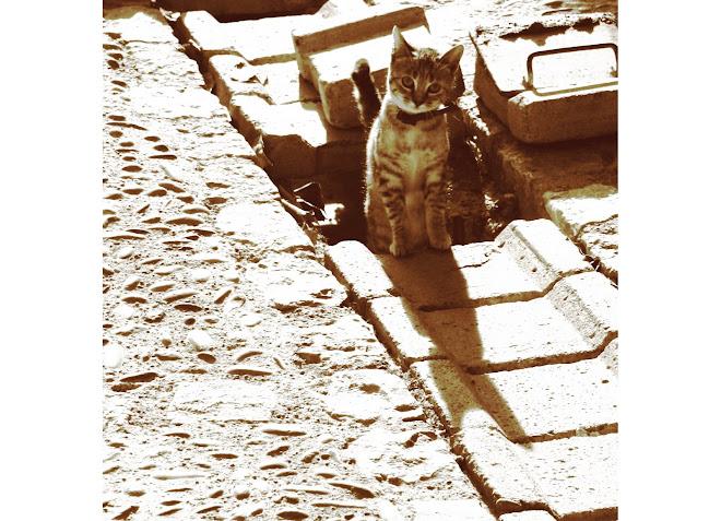 petit chat d'Alquezar
