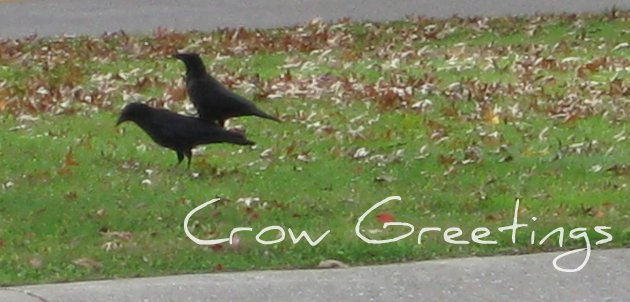 Crow Greetings