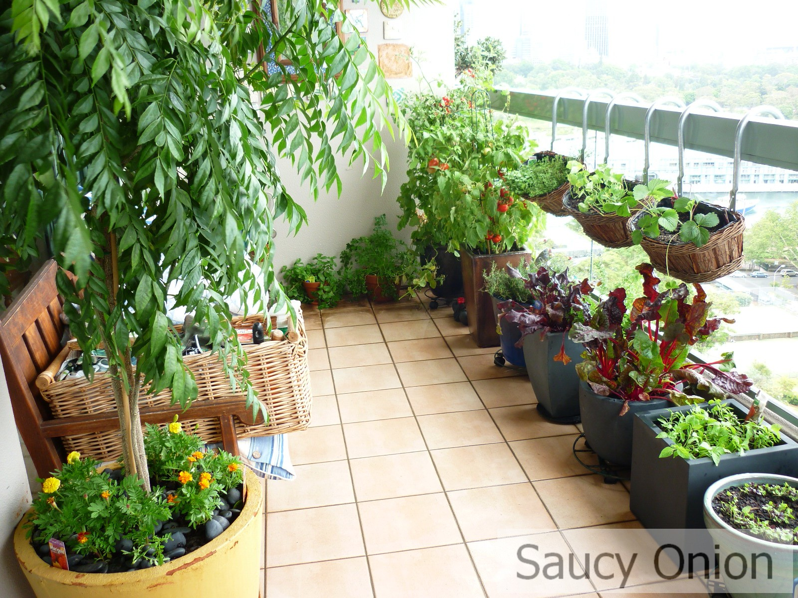 60+ Best Balcony Vegetable Garden ideas 2020 UK - Round Pulse