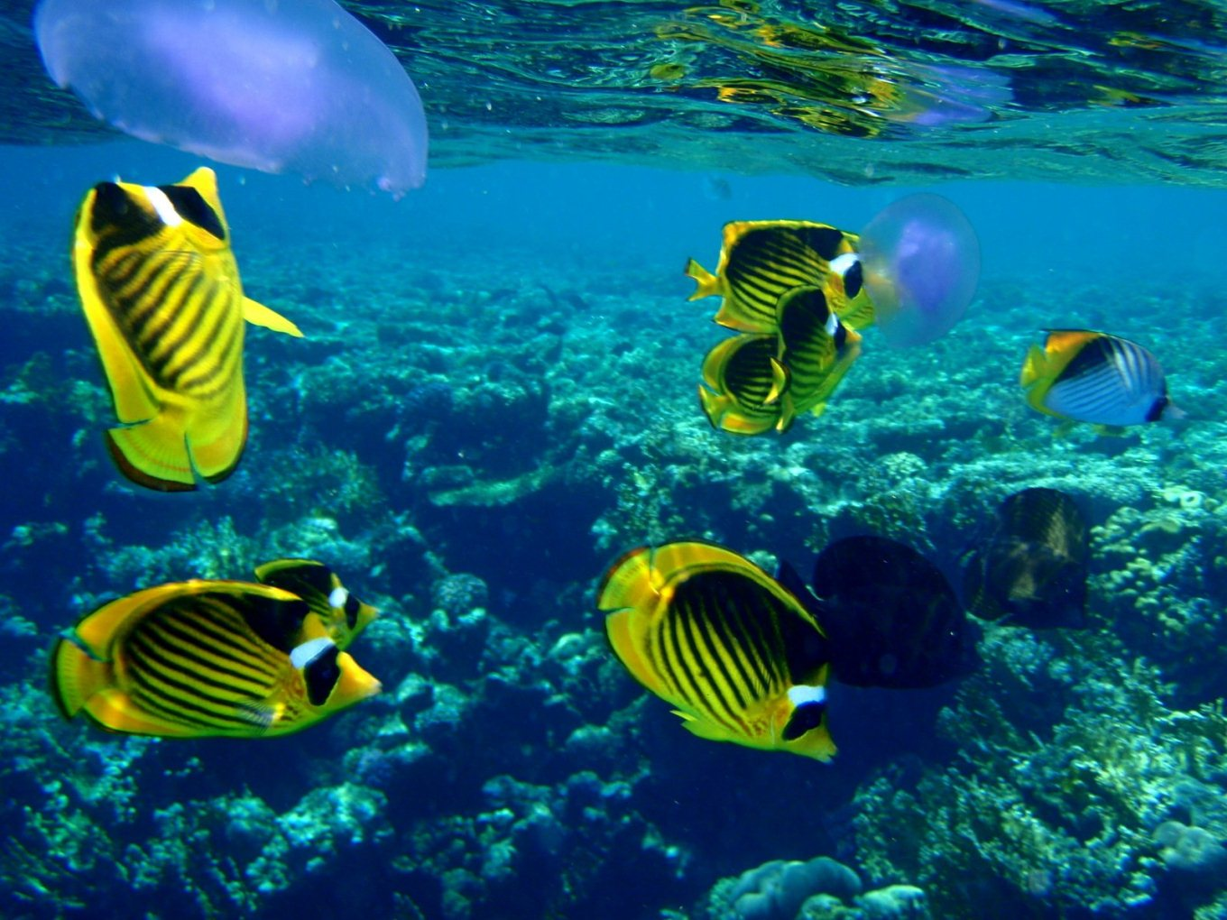 From egypt with love life below the red sea for Red sea fish