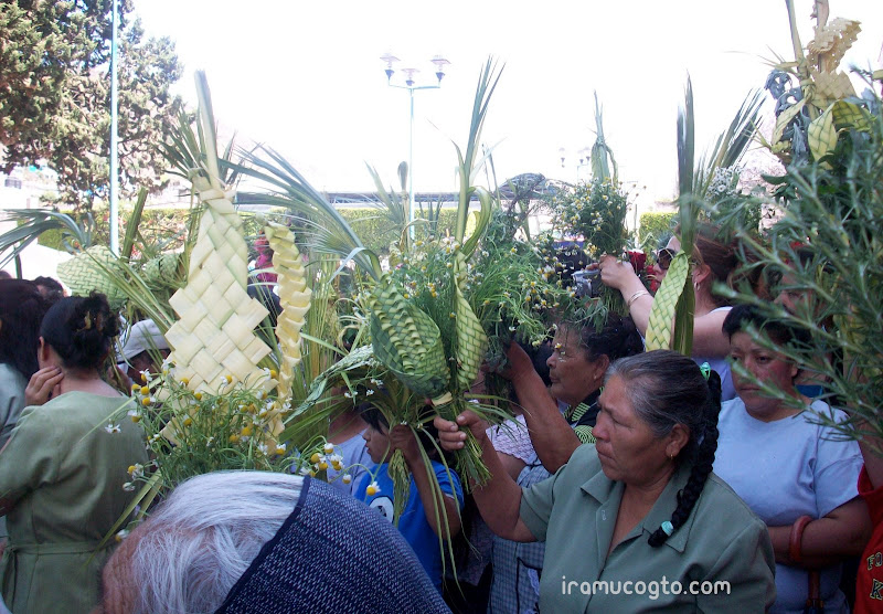 Domingo de Ramos en Irámuco, Gto