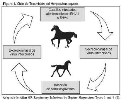 anabolicos para caballos en humanos