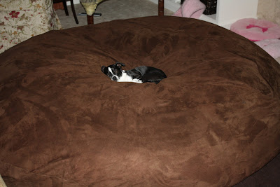 The gibson39s july 2009 for Extravagant dog beds