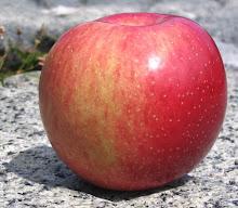 Adam's Apples An amateur explores the pomaceous fruit