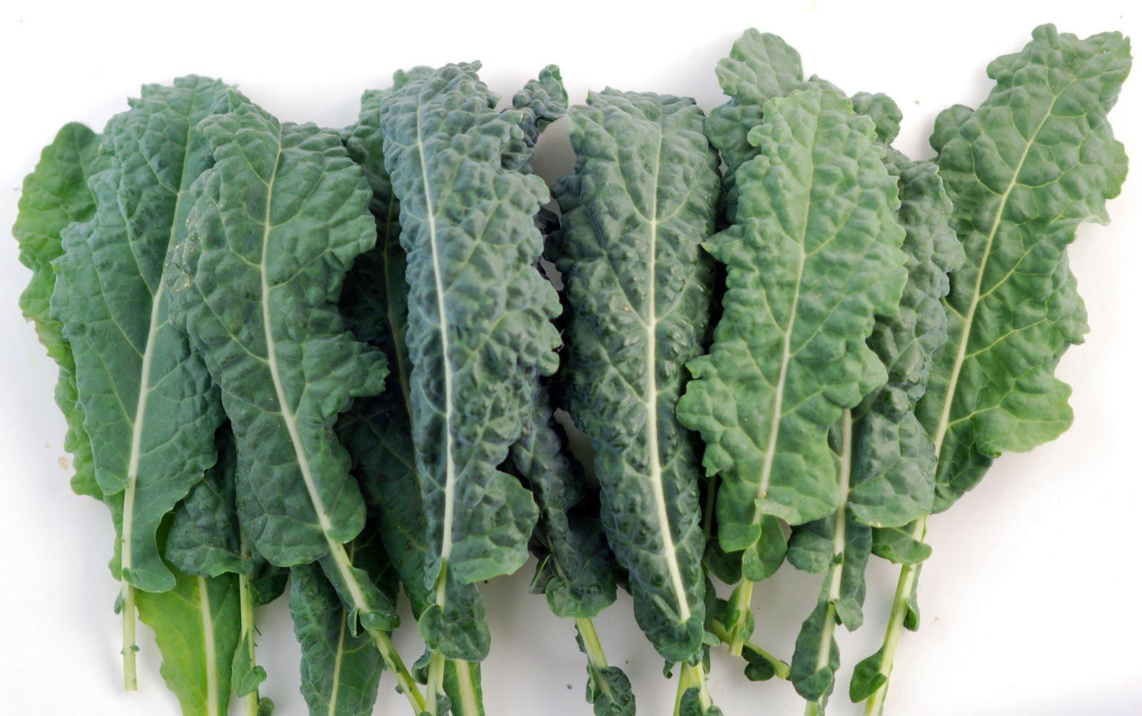 http://3.bp.blogspot.com/_QWZGKyz1Cak/S7yQmXA746I/AAAAAAAABIQ/WSPd4A8lmdw/s1600/Kale-Lacinato-Cut.jpg
