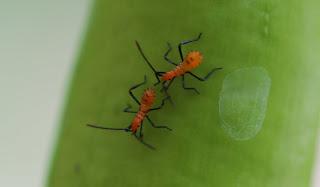 Image gallery orange garden bugs - Plant vegetable garden friends foes ...