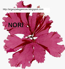 Nori herborizada