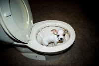 Picture of puppy potty training