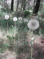 [fairy+flowers]