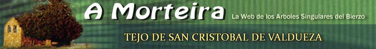 Tejo de San Cristobal de Valdueza