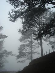 Neblina en bosque Hondureño