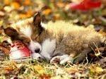 """""""A compaixão pelos animais está intimamente ligada a bondade de caráter do homem"""""""