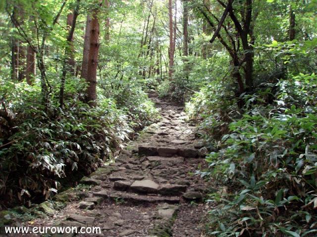Sendero de subida a la montaña Hallasan de Jejudo
