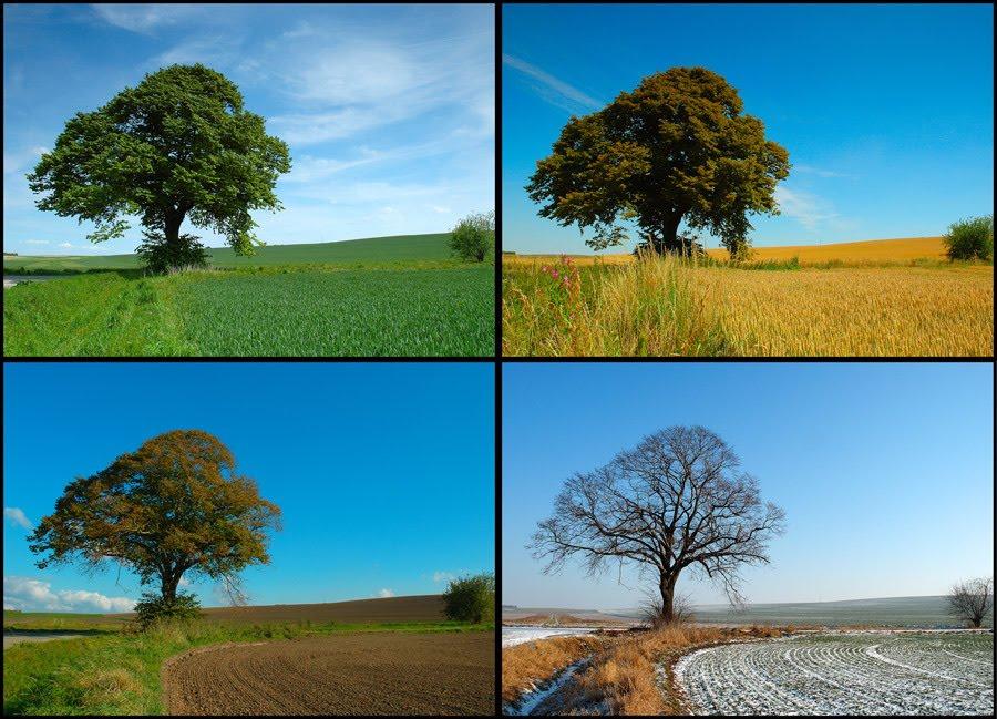 Las 4 estaciones del a o feelings for Arboles para plantar en invierno