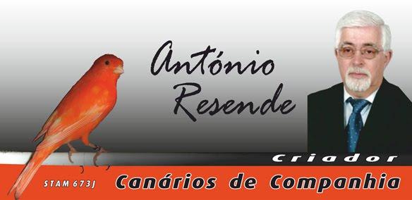 Canários António Resende