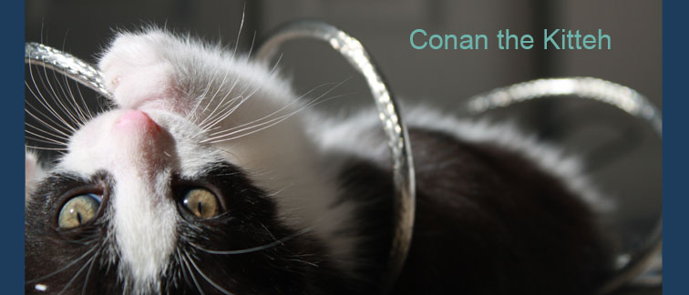 Conan the Kitteh
