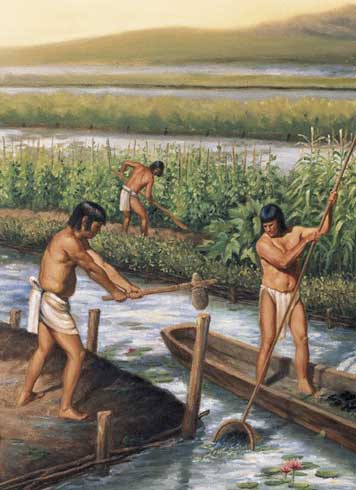 Akumal Direct: Ancient Mayan Farming and Irrigation