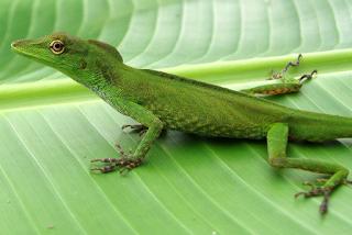 New+species+ +sebuah+catatan+%288%29 Binatang binatang Menakjubkan Asal Hutan Amazon
