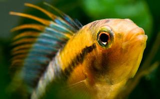 New+species+ +sebuah+catatan+%2811%29 Binatang binatang Menakjubkan Asal Hutan Amazon
