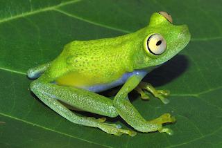 New+species+ +sebuah+catatan+%2813%29 Binatang binatang Menakjubkan Asal Hutan Amazon