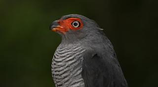 New+species+ +sebuah+catatan+%2814%29 Binatang binatang Menakjubkan Asal Hutan Amazon