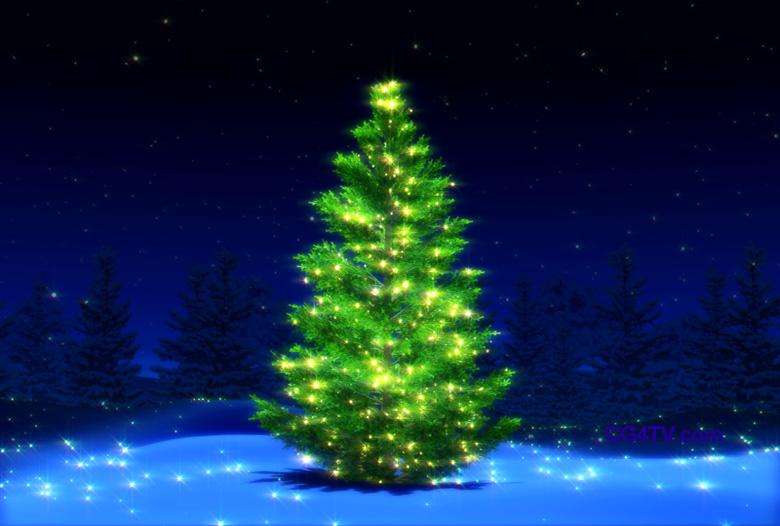 [christmastree.jpg]